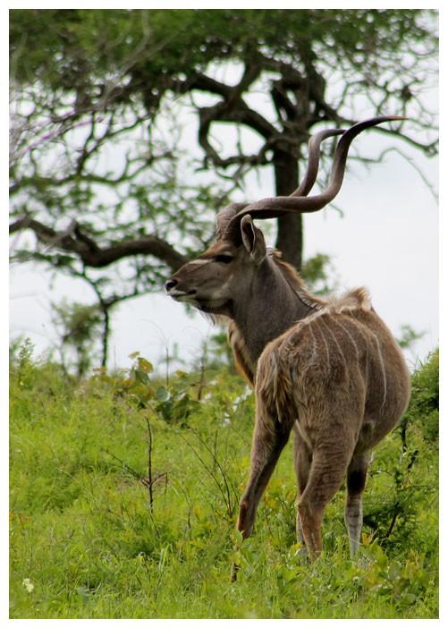 2a_inn_general_kudu